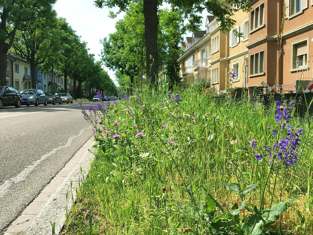 Baumpatenschaft, Stadtgärtnerei Basel, Urban gardening, Stadtgärtnern, urbanroots