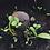 Thumbnail: Seedballs Sonnenblumen
