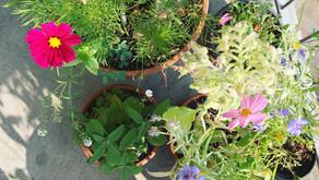 Essbare Blüten und ihre Nutzung