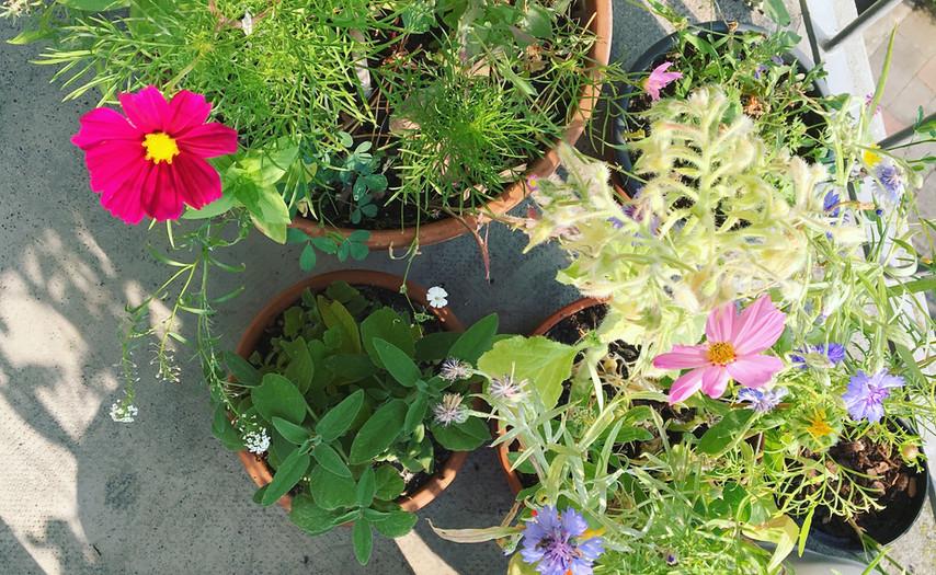 Essbare Blüten im Juli