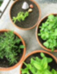 kräutergarten, kräuter, topfpflazen, urban gardening, balkongarten, gartentipps