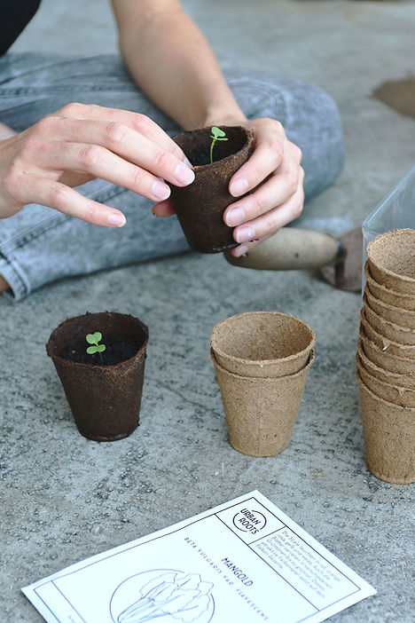 Urbanroots, urban gardening, bio saatgut, bio samen, balkongarten, setzling, saatgut-abo, nachhaltiges geschenk, balkongarten
