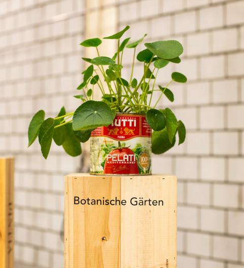 botanica133.jpg