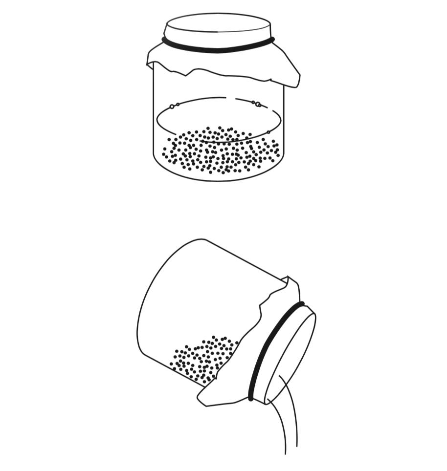 Alfalfa Sprossen, Sprouts, Sprossen ziehen