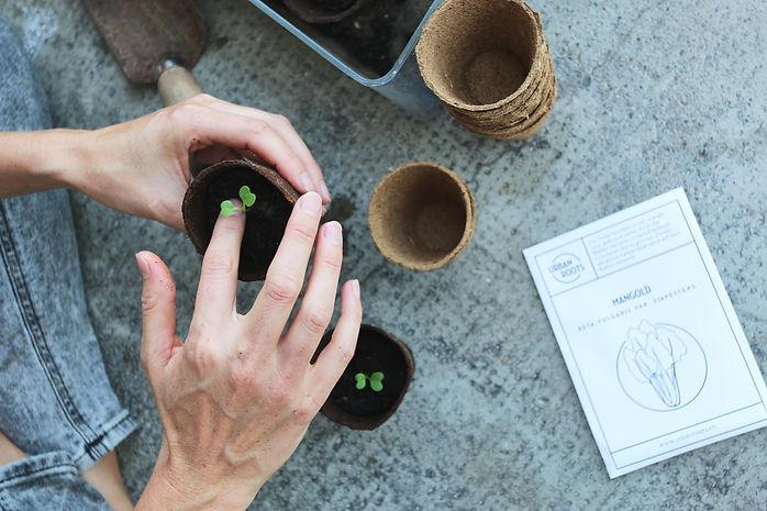Urbanroots, urban roots, urban gardening schweiz, bio samen, bio saatgut, balkon bepflanzen, gemüse auf dem balkon