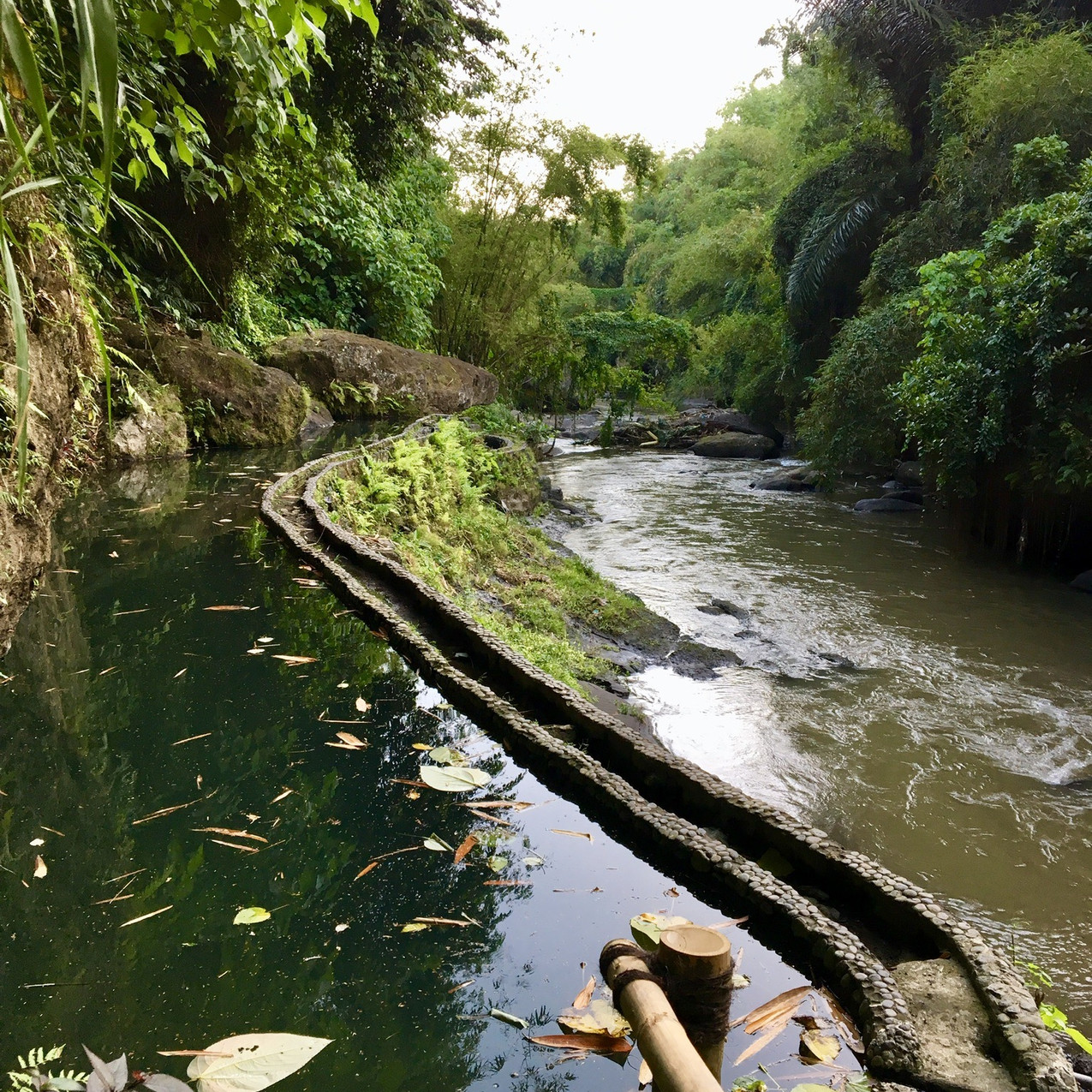 The natural pool at the Green School Bali right next to the farm. It is fed by a natural spring.