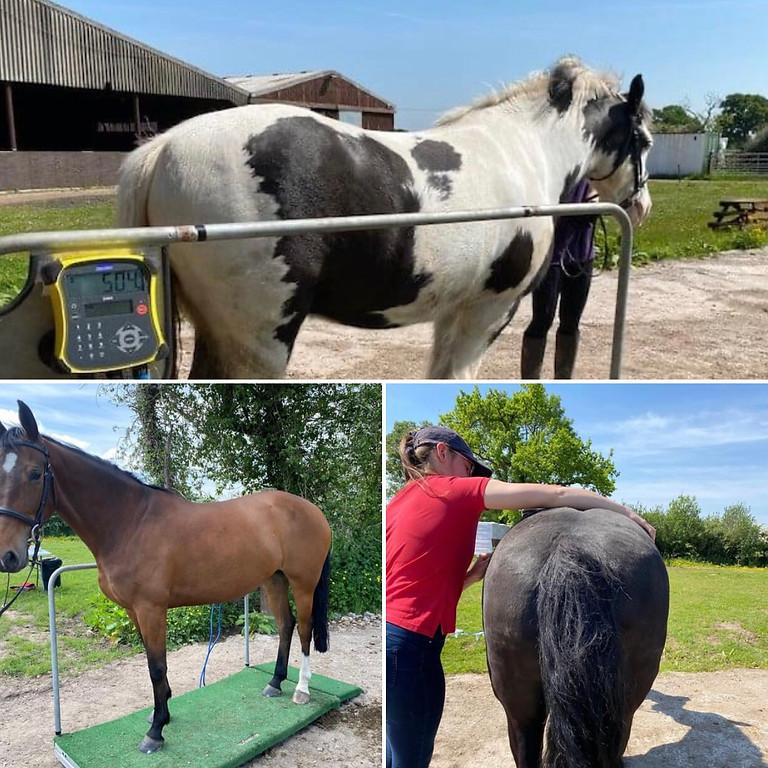 BHS Horse Health Visit