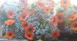 Gerberas oranges et gypsophyle