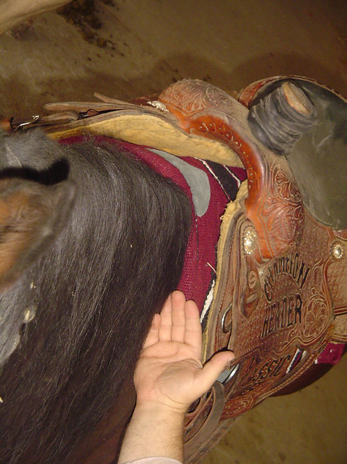 Show Me Saddle Fit