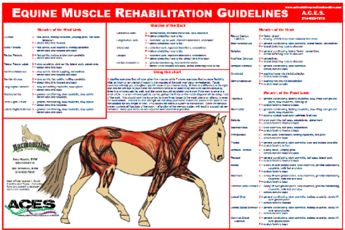 Equine Muscle Rehab Chart (50 Copies)
