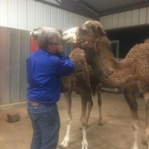 camel (3).JPG