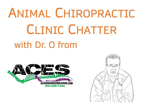 Clinic Chatter (Sponsorship Package)