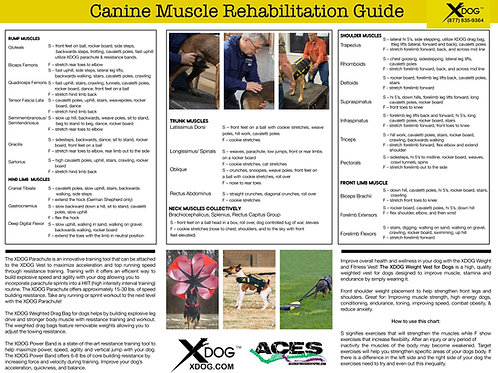 Canine Muscle Rehab Chart (50 Copies)
