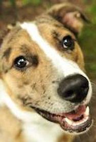 gensis-family-chiropractic-dog21.jpg