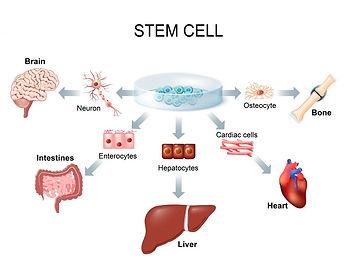 Stem Cell Chiro.jpg