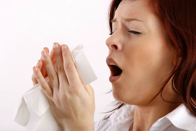 Chiropractor, Sinus and Allergy Relief