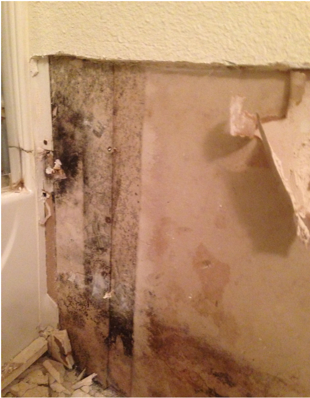 Mold growth behind a refrigerator