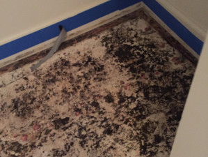 Affordable Mold Remediation