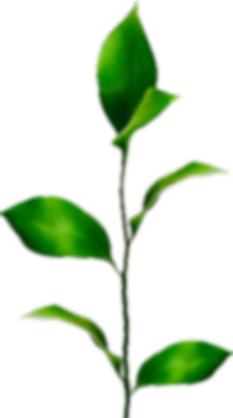 plant_2.png