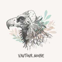 Illustration vautour
