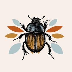 Illustration insecte - Scarabée