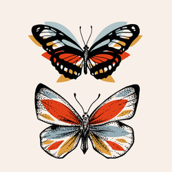Illustration insecte - Papillons
