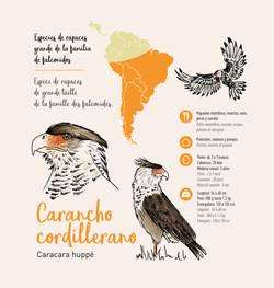 Illustration pédagogique oiseau