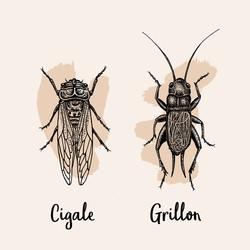 Illustration grillon et cigale