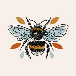 Illustration insecte - Bourdon