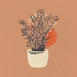 Illustration Plante