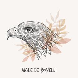 Illustration aigle