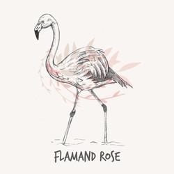 flamand-rose