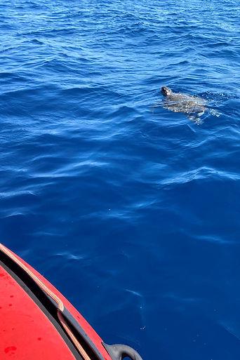 Rencontre avec une tortue en revenant de l'Elevine
