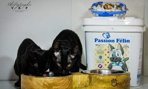 Boutique en ligne - Nourriture pour chats