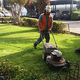jardinero 2.jpg