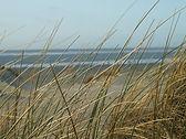 beach-210006_960_720.jpg