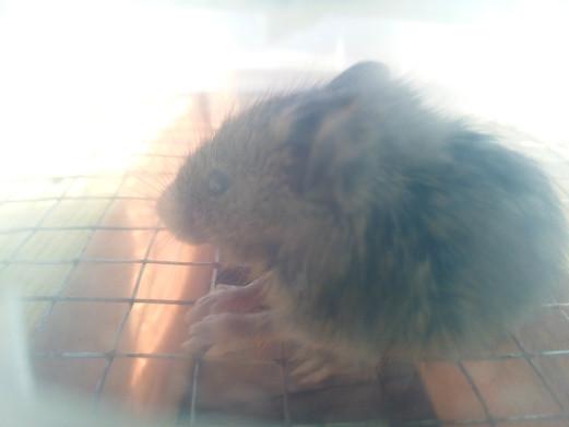 Мышка-полёвка не может выбраться из ловушки из сетки 7х7 мм