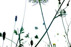 botanica_france_2
