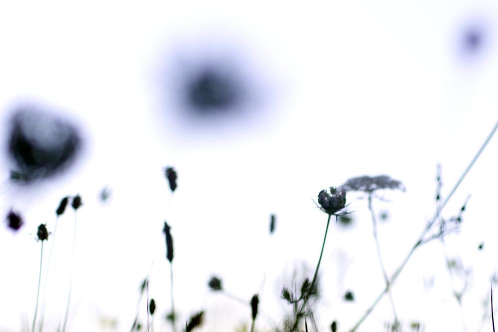 botanica_21