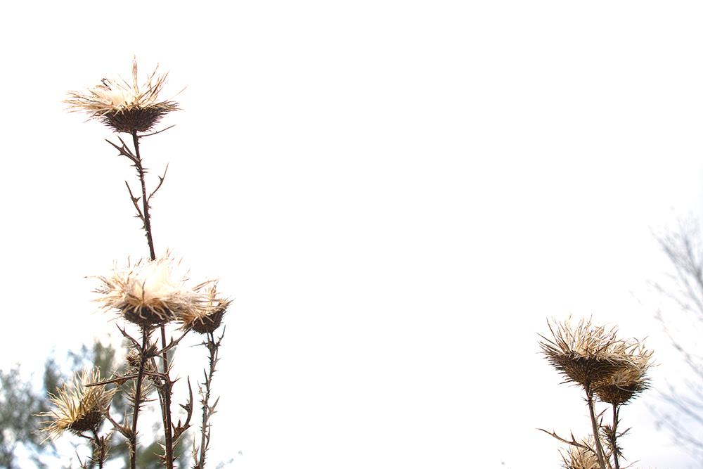 botanica_6