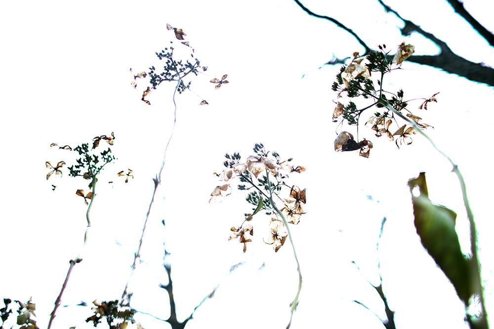 botanica_18