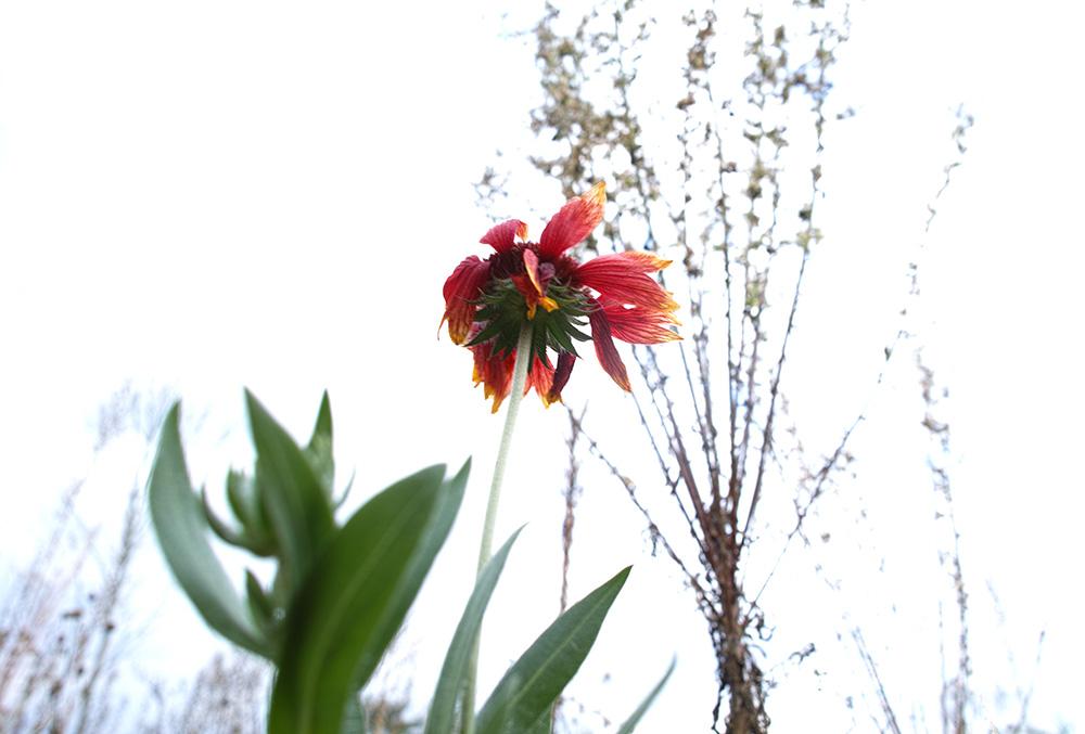 botanica_5