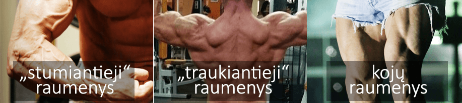 Raumenų grupės