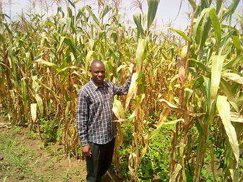 Maize 1 farm Sept 2019.jpg