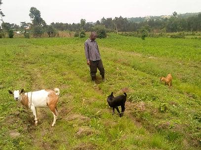 Goat farm 1 Sept 2019.jpg
