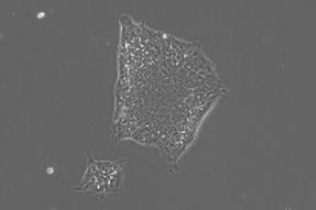 ESI-017  R&D Vial