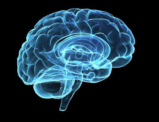 neurociência aplicada