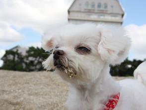 新型コロナウイルスの犬猫への感染に関する各獣医師会のコメント
