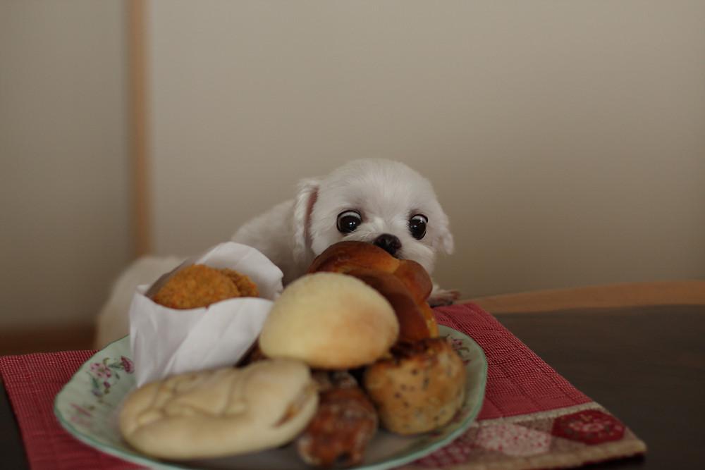 美味しい食事を食べ過ぎたら太ります!