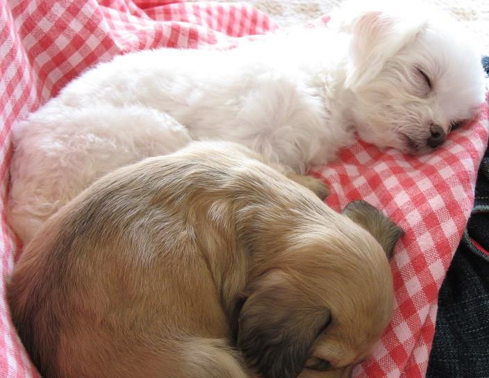子犬と成犬。どちらも普通なら、添加は要りません。